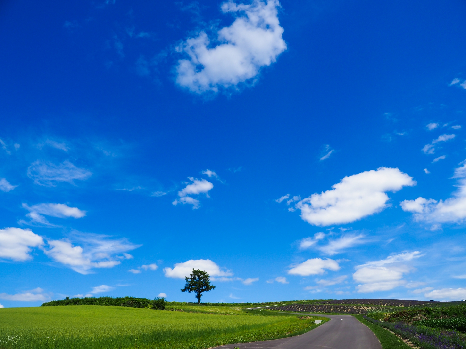 夏の富良野